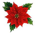 christmas flower2